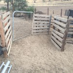 Old wood pallets slotted onto star pickets to form a corral.
