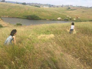 Farming that regenerates the landscape